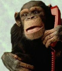 monkeyonphone